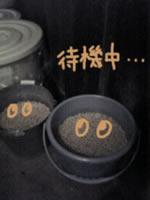 みそ-待機.jpg