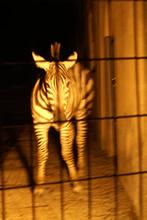 giraf200.jpg