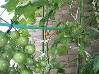 tomato_aka.jpg