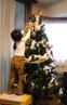 tree_saya.jpg